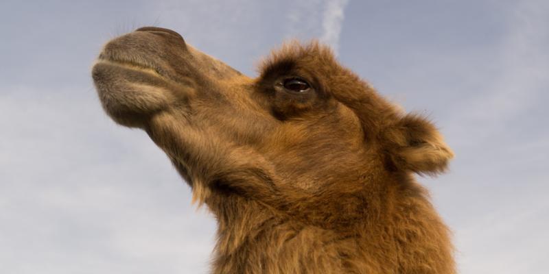 Coaching – Geschichten: Das 18. Kamel (E-Book zum Download)
